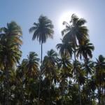Extensos coqueirais em toda a orla de Porto de Galinhas