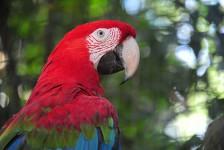 Parque das Aves espera mais de 6 mil visitantes no feriadão de Finados