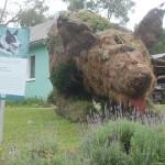 Homenagem ao cão de pastoreio, Border Collie