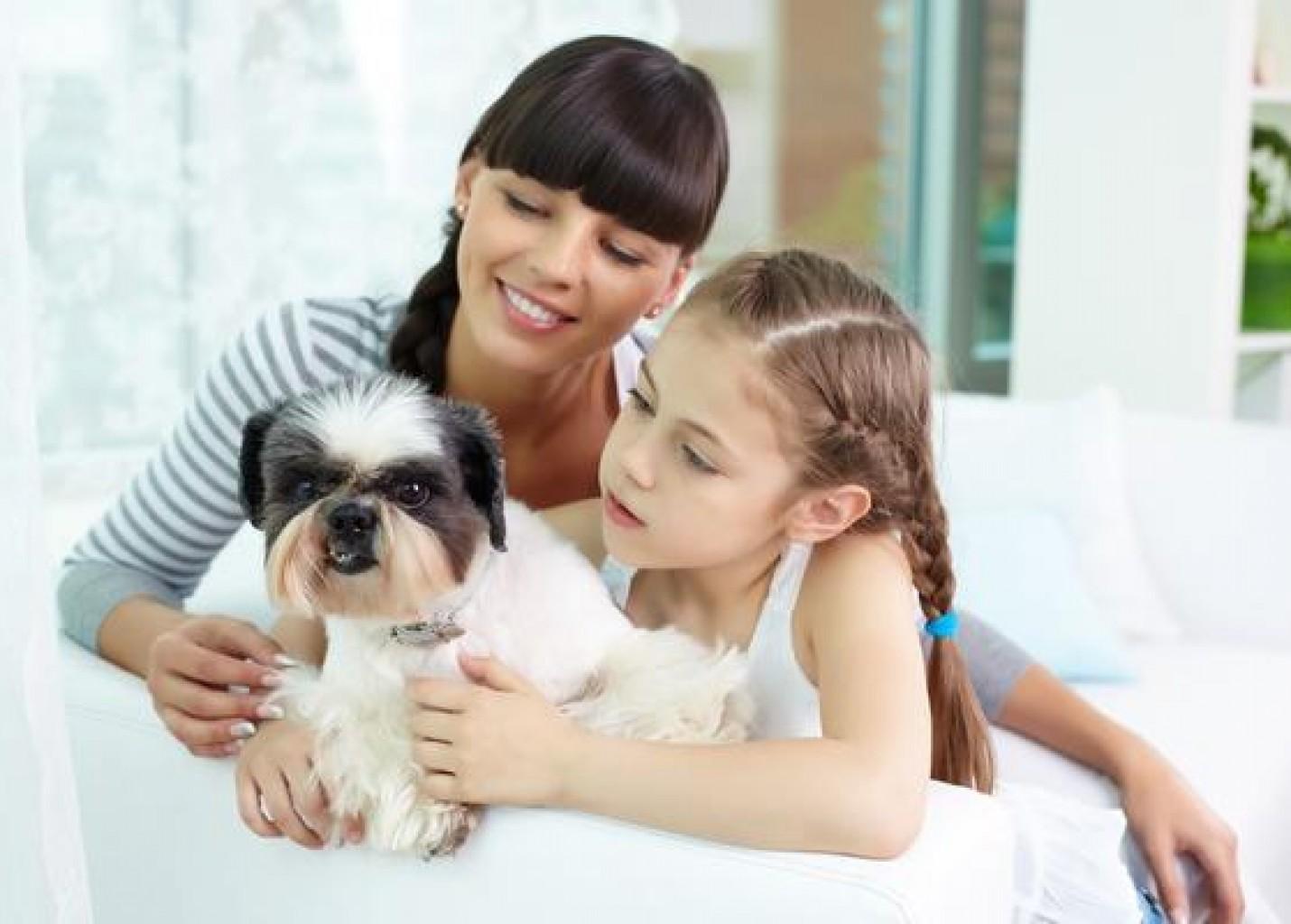 Rio de Janeiro lançará selo Pet Friendly para setor hoteleiro