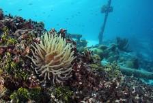 Curaçao figura entre os melhores destinos de mergulho no Caribe e Atlântico