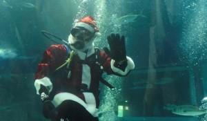 AquaRio prorroga mergulho de Papai Noel até o próximo domingo (27)