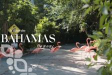 Bahamas relançam site oficial com novos recursos e funcionalidades