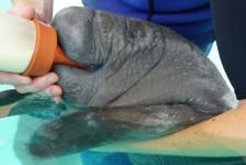 SeaWorld lança página dedicada ao trabalho e à preservação de animais