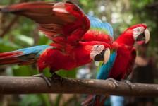 Parque das Aves recebe mais de 7 mil visitantes no carnaval