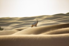 Emirates reforça compromisso com a preservação da vida selvagem e dos habitats