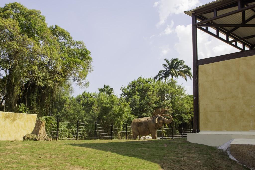 Elefante_1_por_Juan_Carvalho