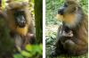 Disney celebra nascimento de filhote de mandril no Animal Kingdom