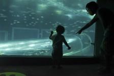 AquaRio terá entrada gratuita para todas as mães durante o mês de maio
