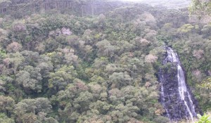 Governo publica edital de concessão da Floresta Nacional de São Francisco de Paula