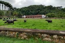 Vale do Café (RJ) passa a investir no polo gastronômico bufaleiro