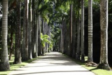 Jardim Botânico fecha parceria com Rio Convention Bureau para captar eventos