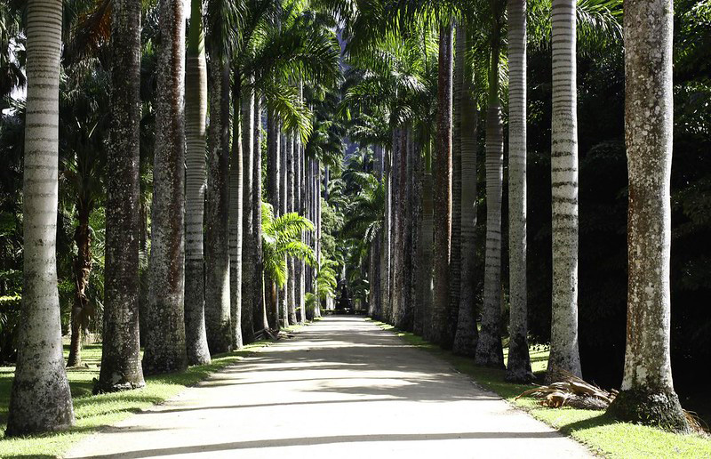 jardim botanico Flickr IPJBRJ