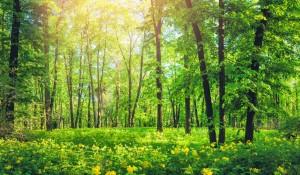 Sebrae Mato Grosso do Sul lança plataforma digital de Ecoturismo