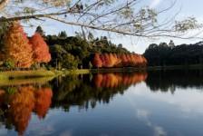 Governo realiza concessão da Floresta Nacional de São Francisco de Paula (RS)