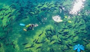 Nascente Azul, em Bonito (MS), ganha museu subaquático