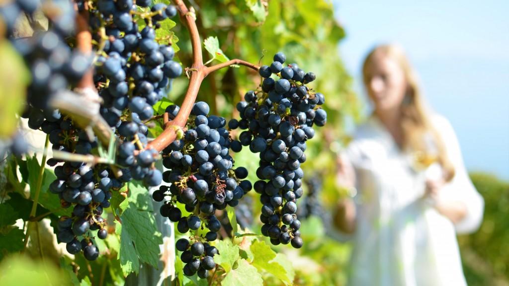 enoturismo vinho