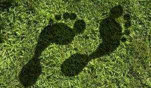Sita conquista certificação de neutralidade de carbono